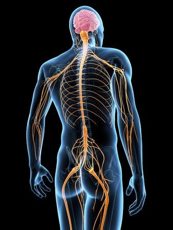 Explaining back pain